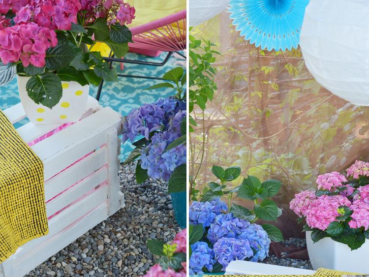 Gartenhortensie pflegen und Deko-Tipps