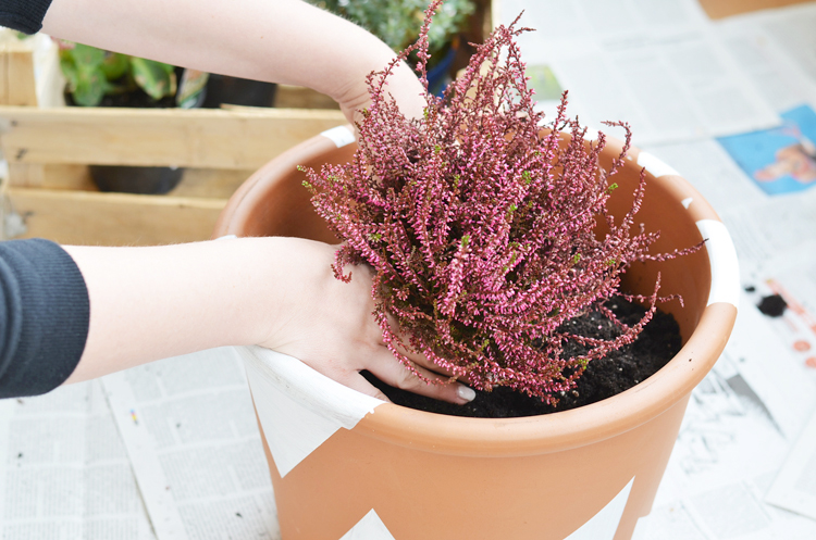 pflanzen-für-den-herbst