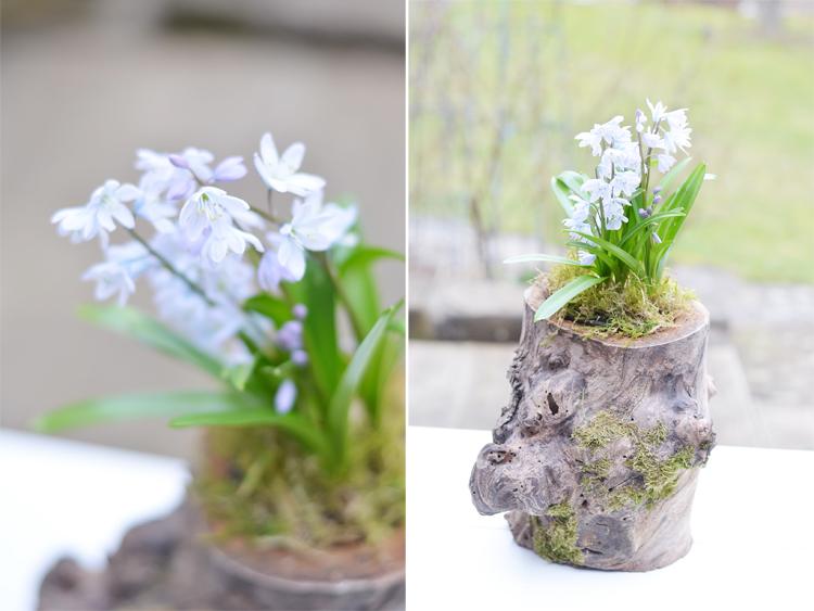 baumstamm-bepflanzen