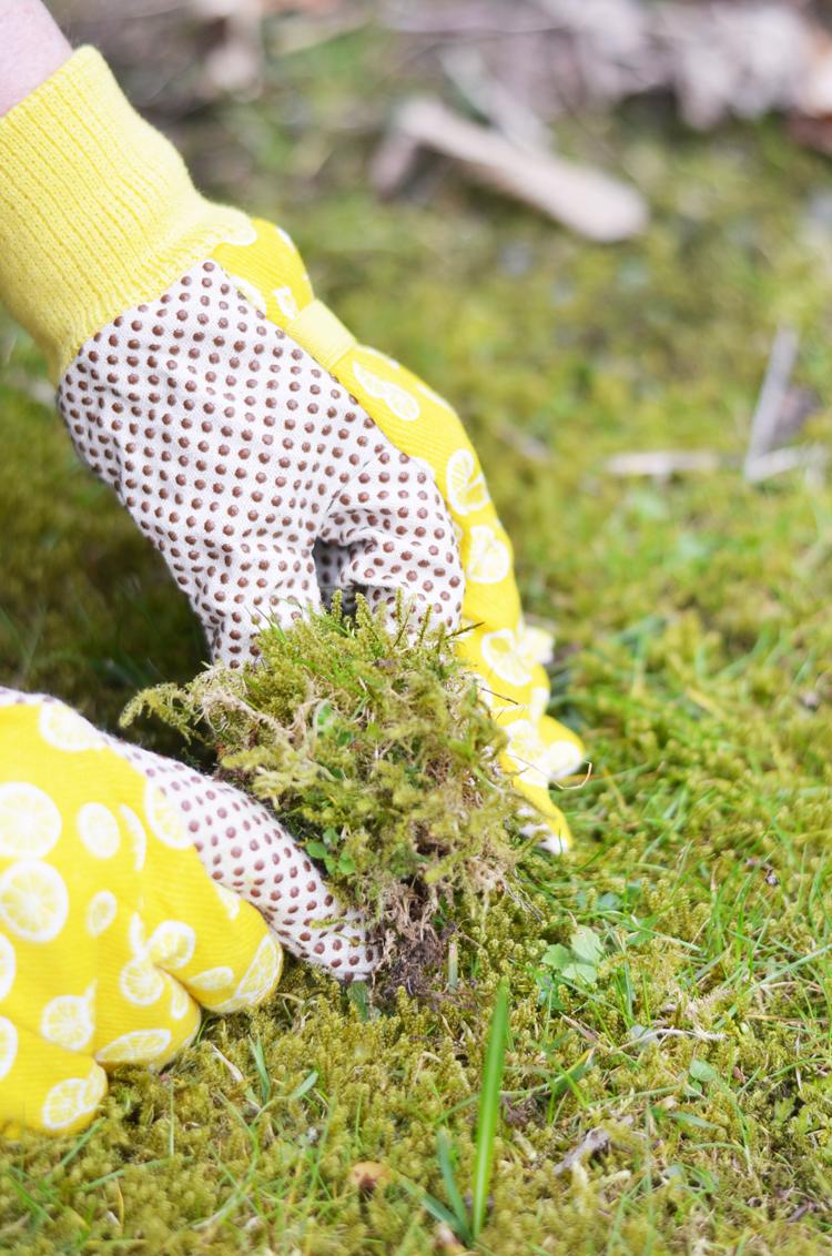 baumstamm-bepflanzen-garten