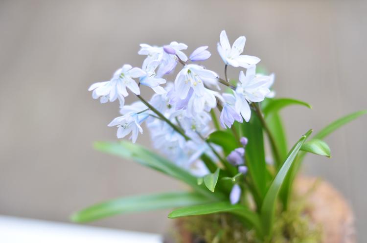 baumstamm-pflanze