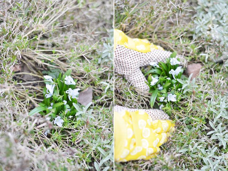 G rtnern einen baumstamm mit blumen bepflanzen bonny und kleid - Baumstumpf garten dekorieren ...