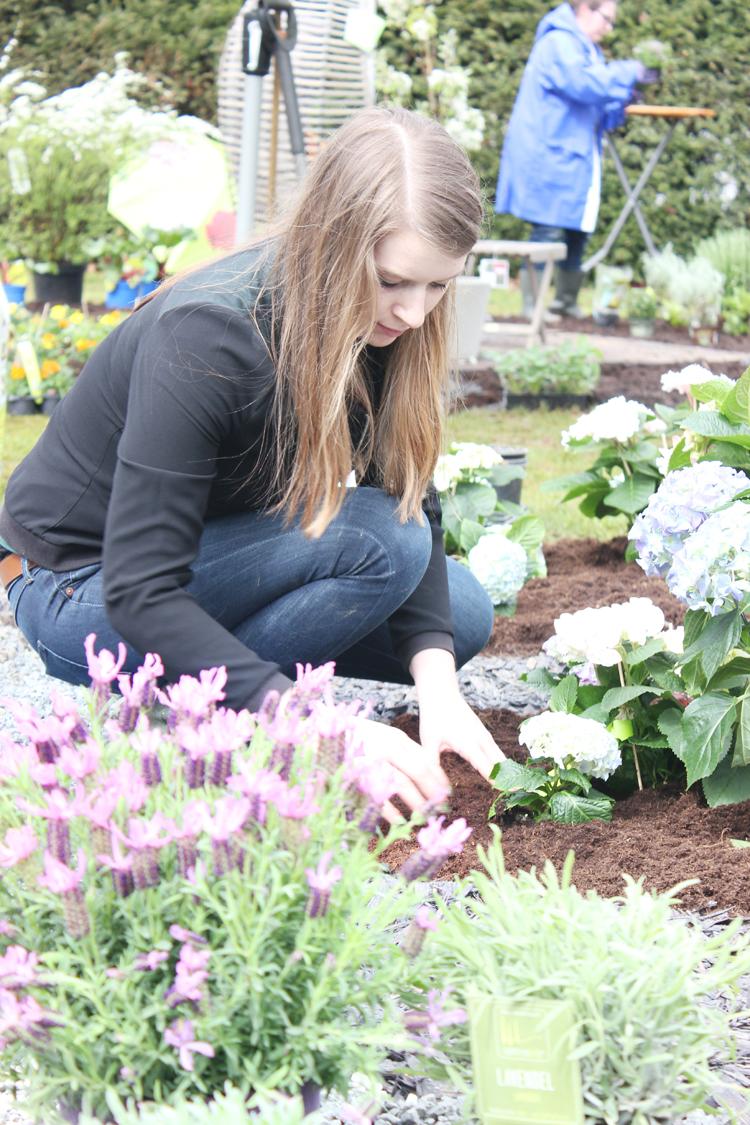 garden-queen-pflanzen-kölle