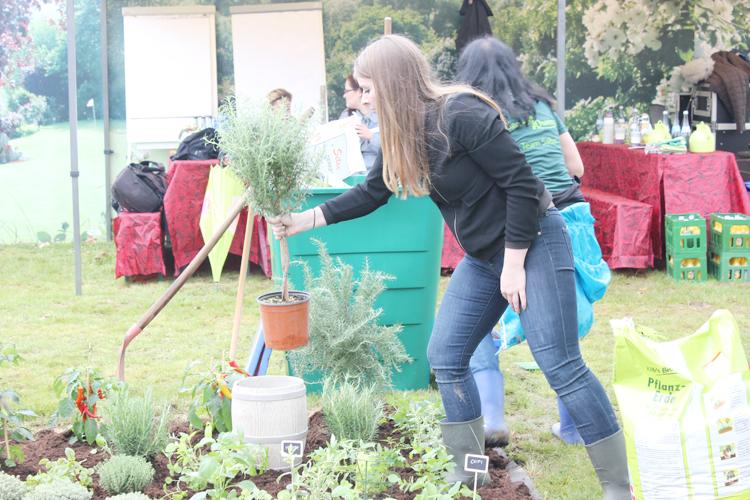 pflanzen-kölle-garden-queen