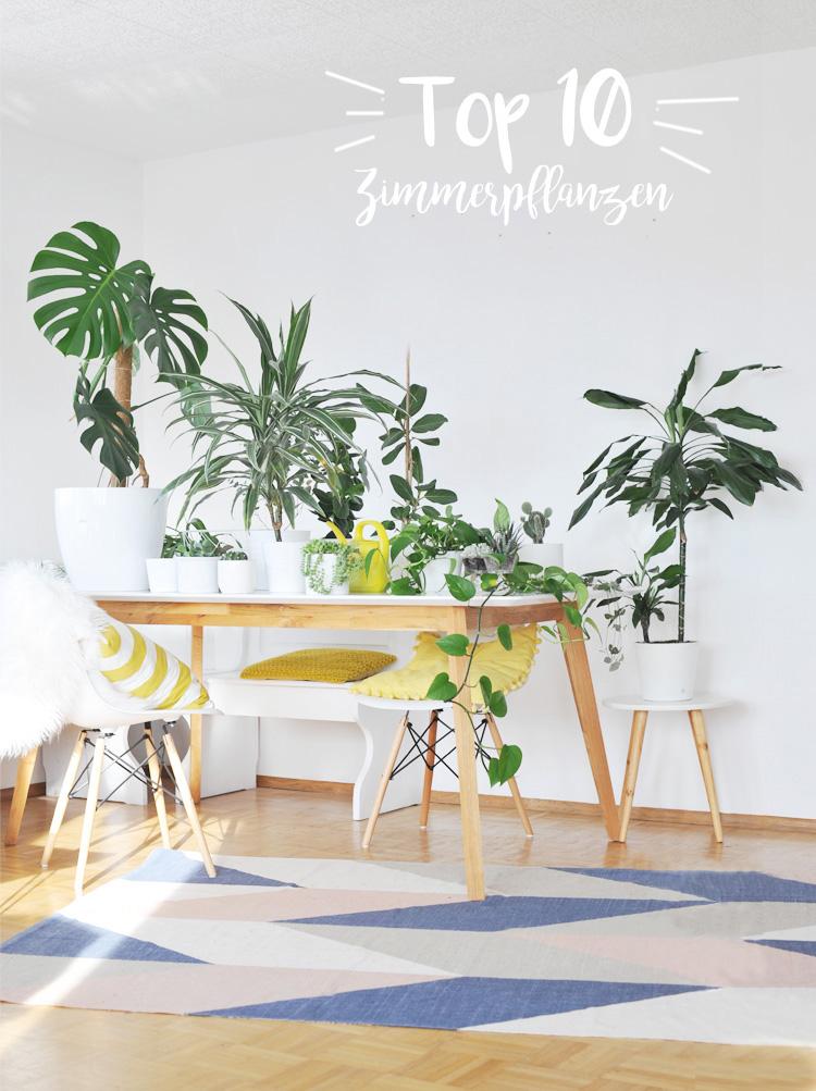 die besten zimmerpflanzen f r die wohnung bonny und kleid. Black Bedroom Furniture Sets. Home Design Ideas