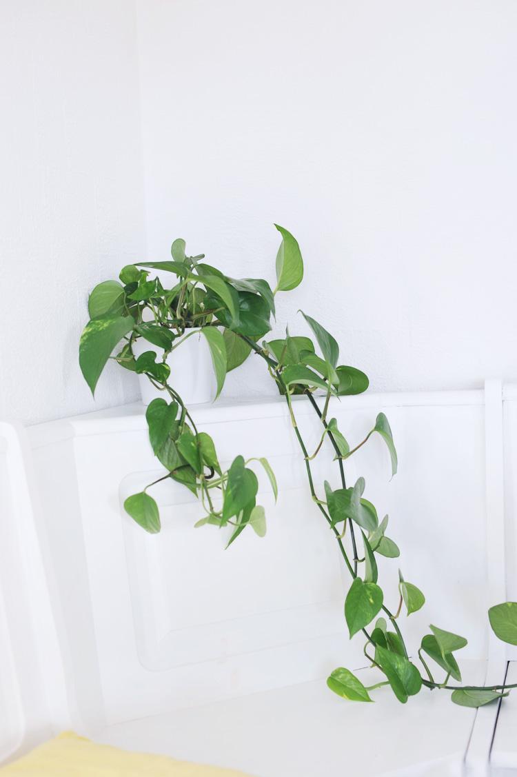pflegeleichte pflanzen fur die wohnung