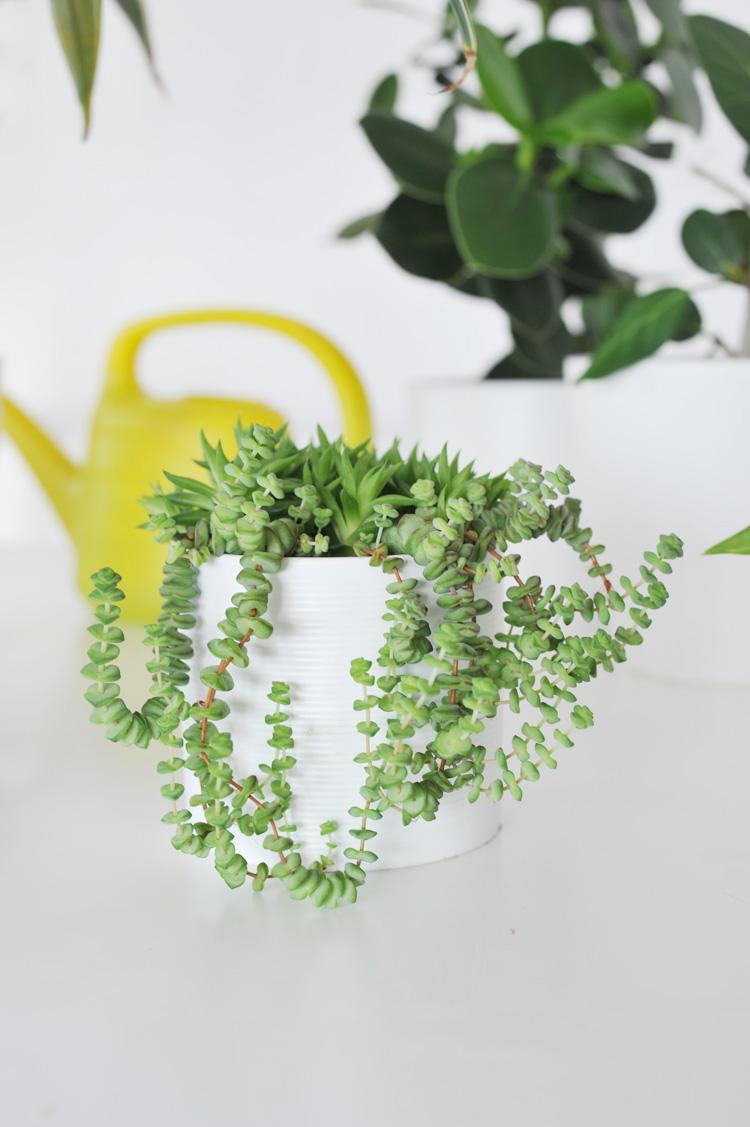 Die besten Zimmerpflanzen für die Wohnung – Bonny und Kleid