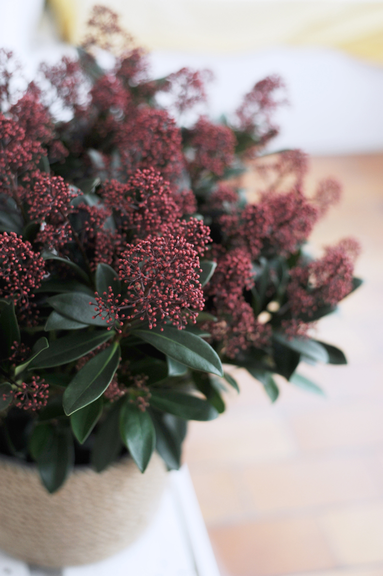 alten Blumentopf mit Garn verschönern