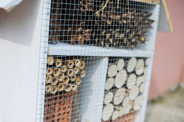 Insektenhotel bauen anleitung kostenlos