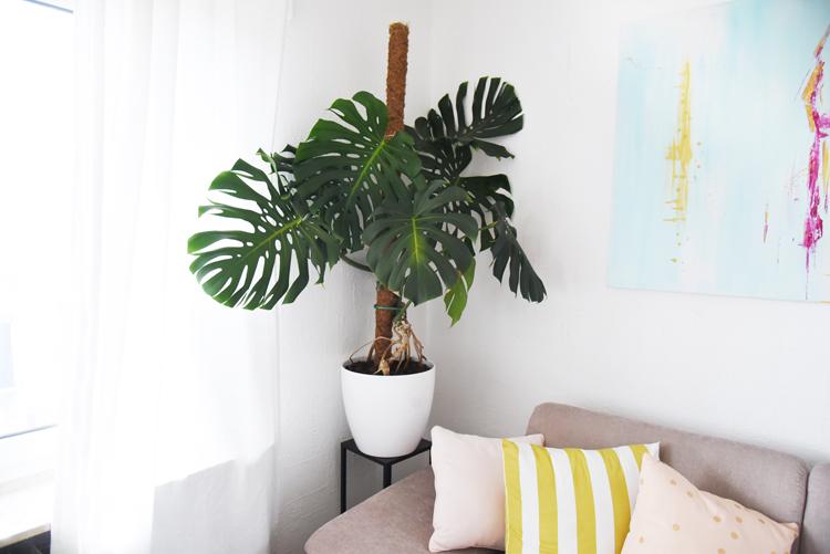 Super Monstera festbinden: So mach ich meine Pflanze hübsch – Bonny und &TR_05
