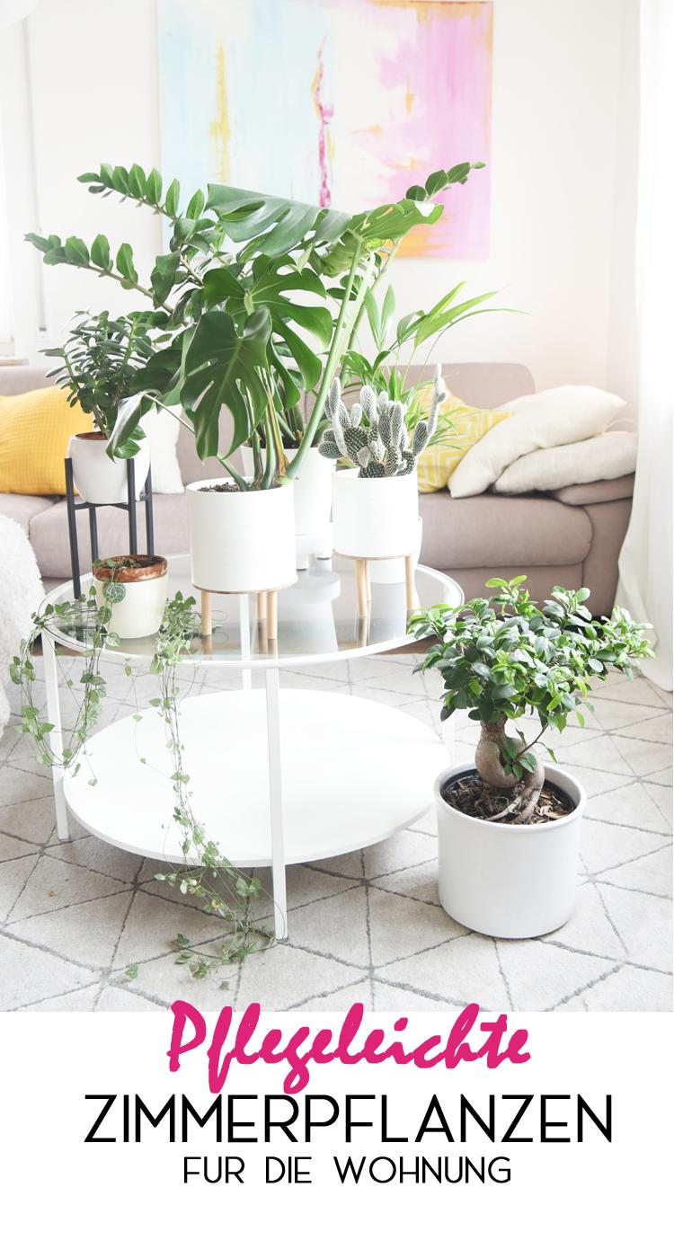 pflegeleichte-zimmerpflanzen-wenig-licht
