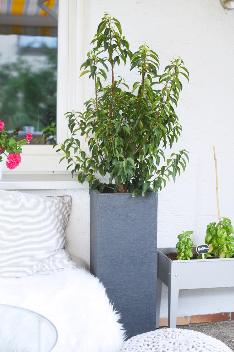balkon-pflanzen-deko